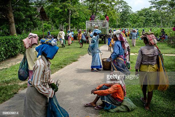 Workers take a break from picking tea leaves at a collection area of the Korangani Tea Estate in the Dibrugarh district of Assam India on Saturday...