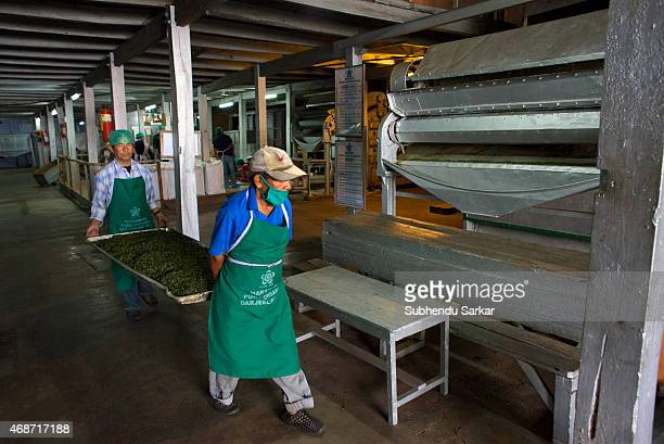 Workers take tea leaves to the drier after they have been rolled by a machine at Makaibari tea factory Set up in 1859 off Kurseong in the Darjeeling...