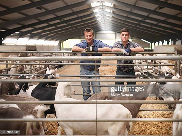 Workers tending to goats on farm