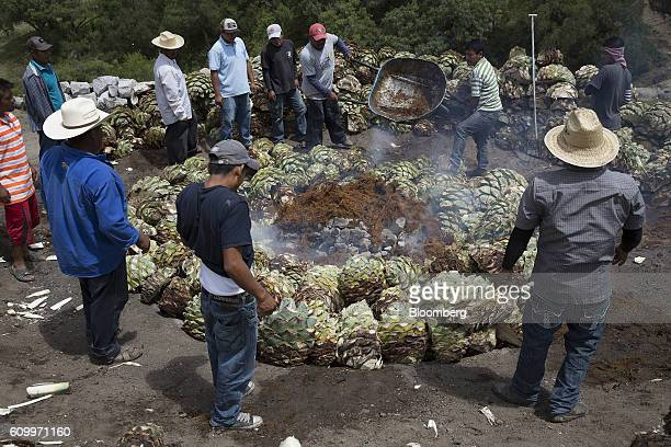 Workers throw dry pulp residue left after the extraction of juice from agave plants known as Bagasse to fuel the fire pit at the Mezcal Union...