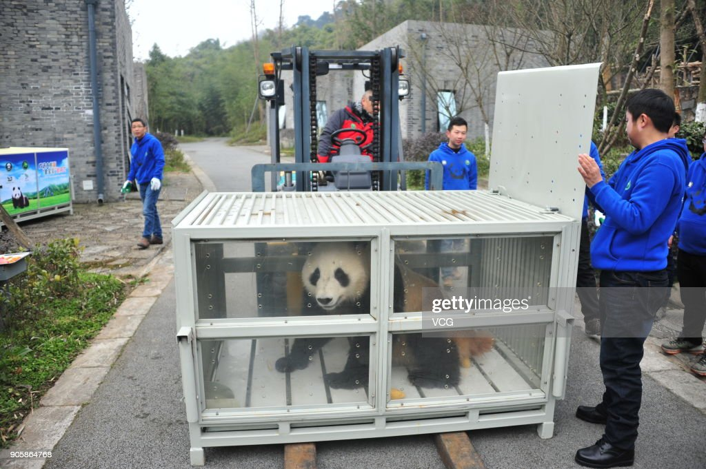 Panda Couple To Arrive In Finland