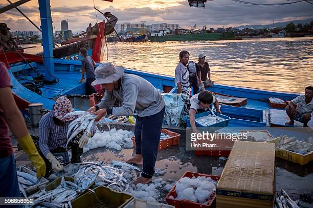 Workers unload fish from the boat of captain Nguyen Cho he said 'we use to work peacefully with foreign boats out of the sea we helped out each...
