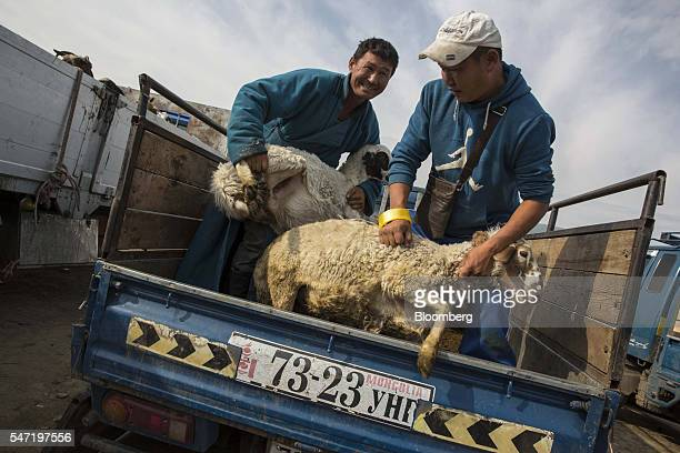 Workers unload sheep from a truck at a livestock market on the outskirts of Ulaanbaatar Mongolia on Wednesday July 13 2016 The nation's growth slowed...