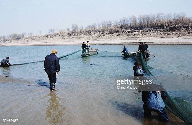 Workers use a net to catch a Finless Porpoise to inspect at the Tongling Freshwater Dolphin Nature Reserve March 21 2005 in Tongling of Anhui...