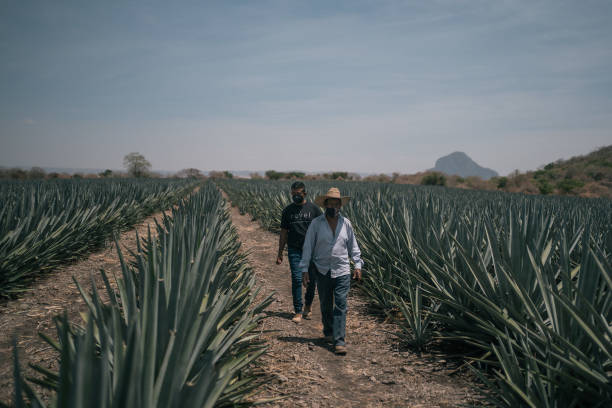 MEX: A New Agave Drink From Mexico Is The Tequila That's Not Tequila