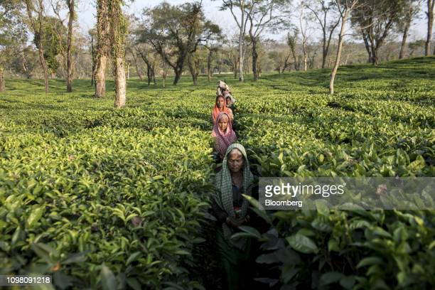 Workers walk through the Rungamattee Tea & Industries Ltd. Chandighat Tea Estate after finishing their shift in Cachar, Assam, India, on Friday, Jan....