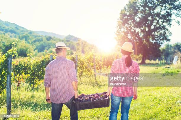 Workers working in vineyard