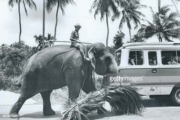 A working elephant carries his lunch of palm fronds past a tourist bus in the beautiful land once called Ceylon
