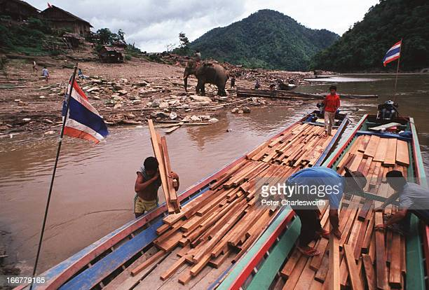 A working elephant labours in a logging camp on the banks of the Salween river while timber is being loaded onto longtail boats to be taken to...