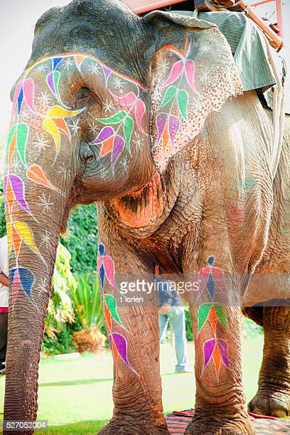 Working Elephant