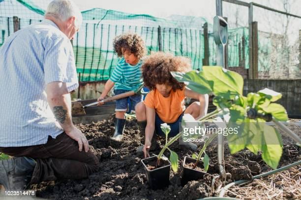 working hard on grandad's allotment - british culture stock pictures, royalty-free photos & images