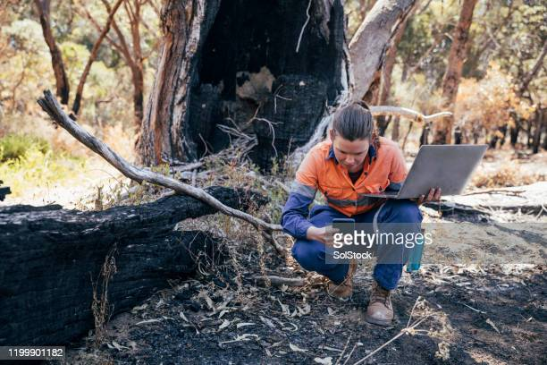 working hard to help her environment - emergencies and disasters stock pictures, royalty-free photos & images