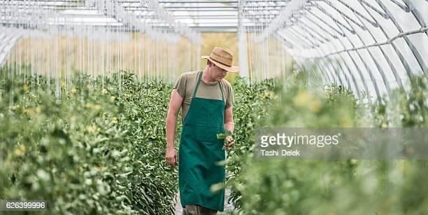 working in greenhouse - gewächshäuser stock-fotos und bilder
