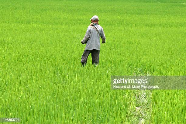 Working in rice fields at Lake Loktak in India