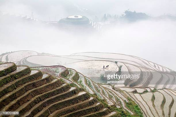 working in the paddy field - terraced field stock pictures, royalty-free photos & images