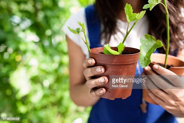 working on an allotment - pot plant stock pictures, royalty-free photos & images