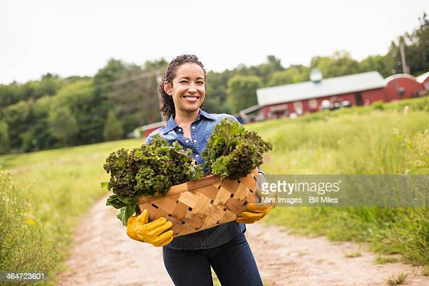 Working on an organic farm. A woman holding a basket full of fresh green vegetables,freshly picked.