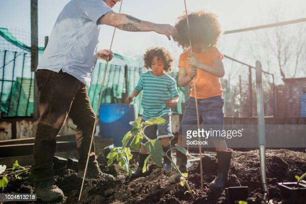 working on the allotment with grandad - self sufficiency stock pictures, royalty-free photos & images