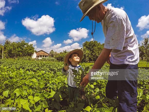 Working on their farm