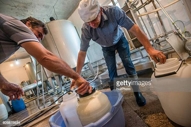 Working process in the dairy factory of the Nikitin Kolkhoz in Ivanovka village Azerbaijan Dairy products of the factory are used for sell in two...
