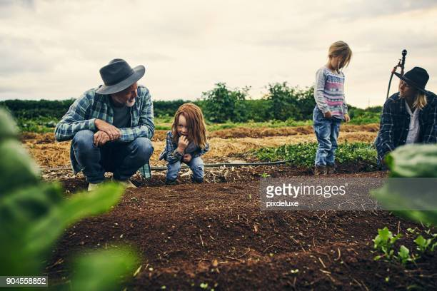 Working the farm as a family