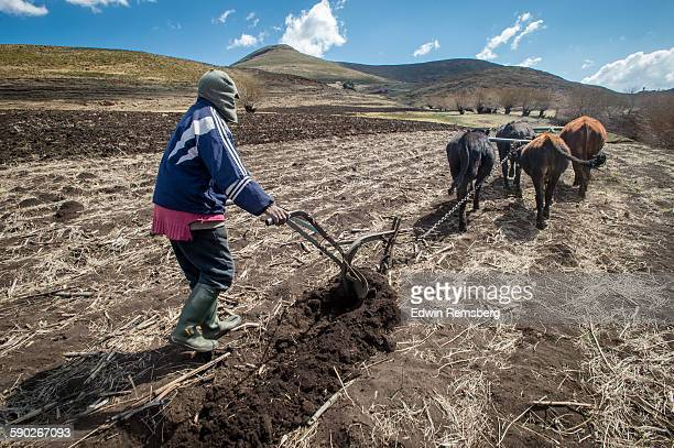 Working the soil