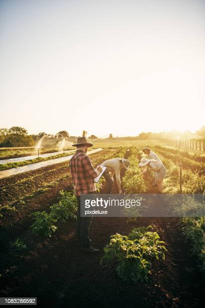 working together to keep the farm producing - agriculture stock pictures, royalty-free photos & images