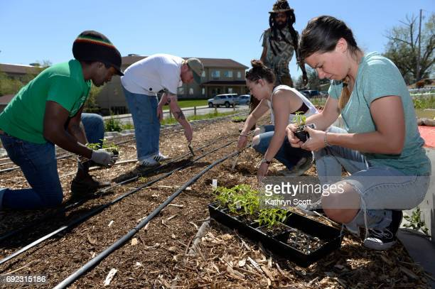 Working together to plant a variety of peppers from left to right Regis professor Damien Thompson Kyle O'neill JaSon Auguste Ryede DeGiovanni and...