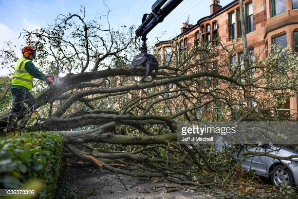 Workmen clear trees in Marlborough Avenue brought down by yesterdays storm which saw winds of up to 100mph on September 20 2018 in Glasgow Scotland...