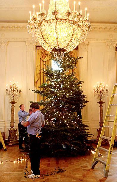 workmen put lights on one of six christmas trees i