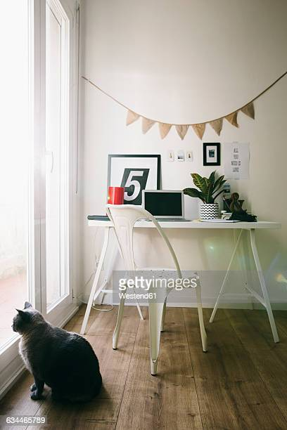 Workplace at home office with cat looking out of window