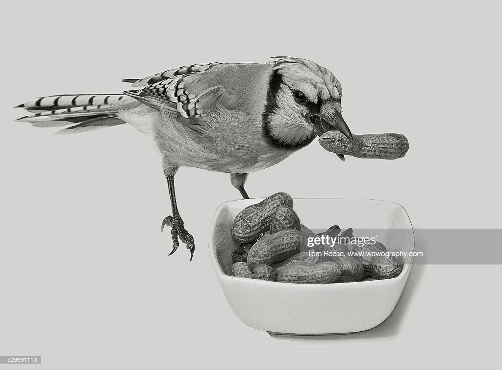 Works for peanuts : Stock Photo