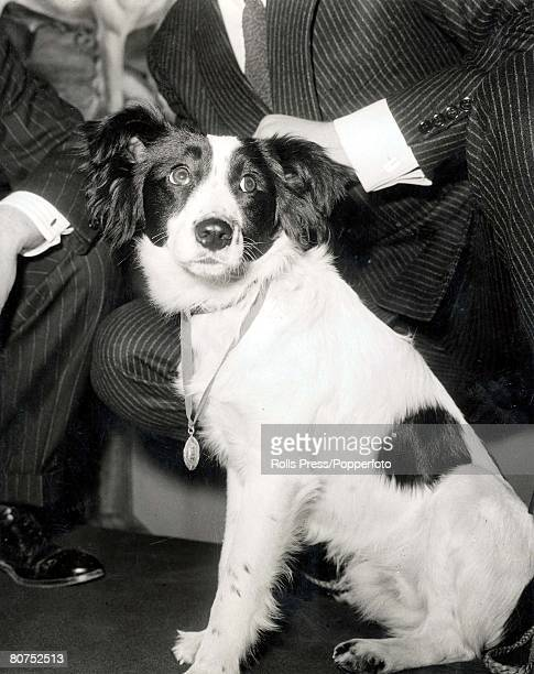 World Cup Finals England London 1st April Pickles the dog that found the Jules Rimet World Cup trophy on March 27th after it had been stolen is...