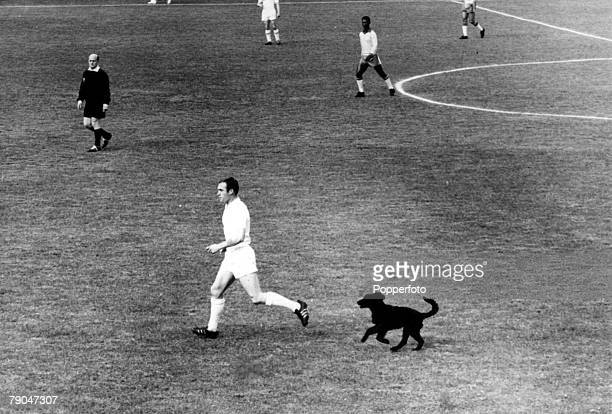 World Cup QuarterFinal Viva Del Mar Chile 10th June Brazil 3 v England 1 England's Ray Wilson is chased by a dog named Bob who strayed onto the field...
