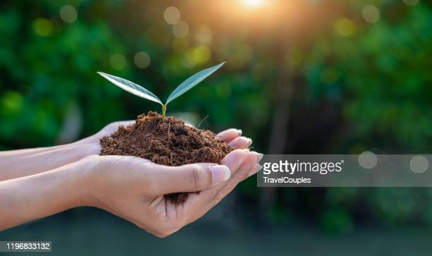 world environment day concept. earth day in the hands of trees growing seedlings. women hands holding big tree over blurred abstract beautiful green nature background - responsabilité photos et images de collection