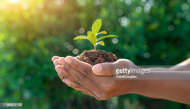 world environment day concept. earth day in the hands of trees growing seedlings. child hands holding big tree over blurred abstract beautiful green nature background - événement caritatif photos et images de collection