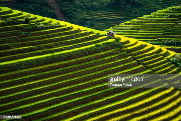 world heritage ifugao rice terraces - rice terrace stockfoto's en -beelden