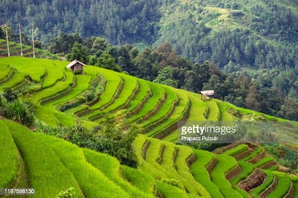 world heritage ifugao rice terraces - paisajes de filipinas fotografías e imágenes de stock