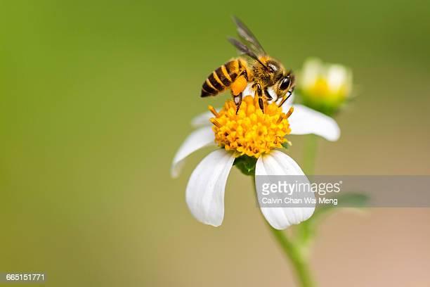 World Honey Bee Day!