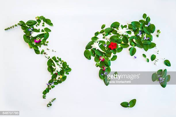 world map with leaves and flowers - responsible business stock photos and pictures
