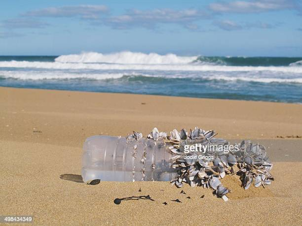 world ocean day - barnacle stock pictures, royalty-free photos & images
