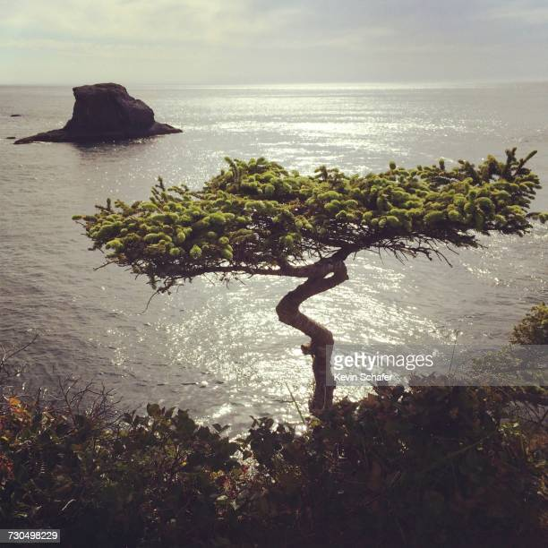 world oceans day - cape flattery stock photos and pictures