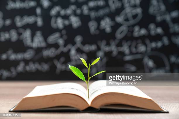 world philosophy day education concept with tree of knowledge planting on opening old big book - intellectual property stock pictures, royalty-free photos & images