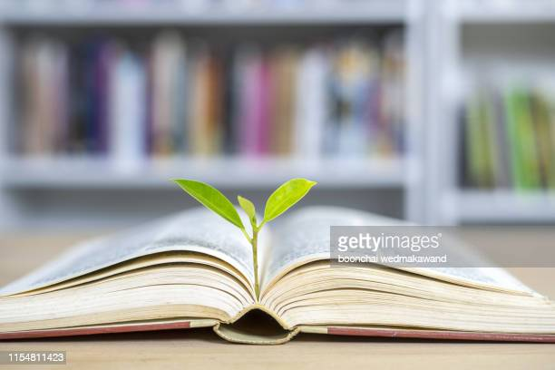 world philosophy day education concept with tree of knowledge planting on opening old big book in library with textbook, stack piles of text archive and aisle of bookshelves in school study class room - philosophy stock pictures, royalty-free photos & images