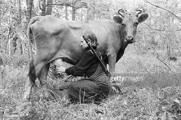 World war 2, a young woman partisan milking a cow seized from the germans behind enemy lines so that wounded members of the group can have fresh...