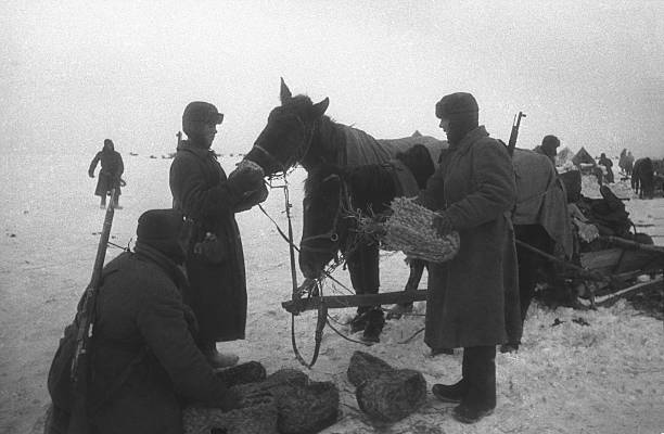 Image result for WW2 GERMAN SOLDIERS FEEDING HORSES