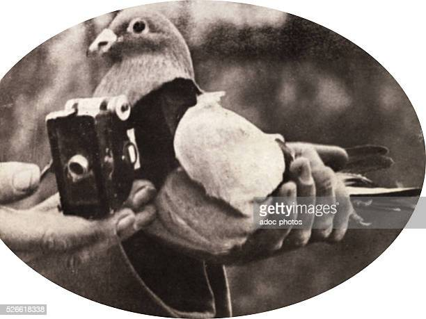 World War I A pigeon with a camera for doing aerial survey Ca 1915