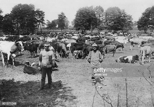 slaughter cattle for the Austrian troups probably in 1915/1916