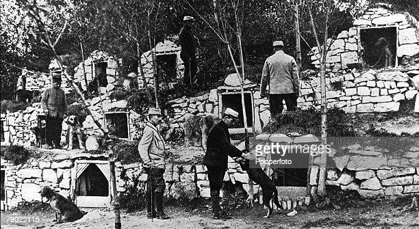 World War I France French war dogs used for passing messages between trenches are pictured in their bomb proof shelters