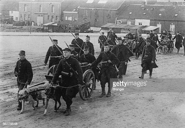 World War I The Belgian front near Ypres The machine guns dragged by dogs End of 1914 BRA100916